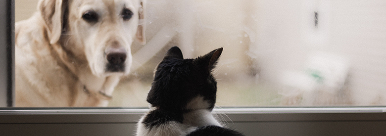 a dog looking at a cat through a window