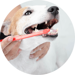 A dog smiling while having his teeth brushed