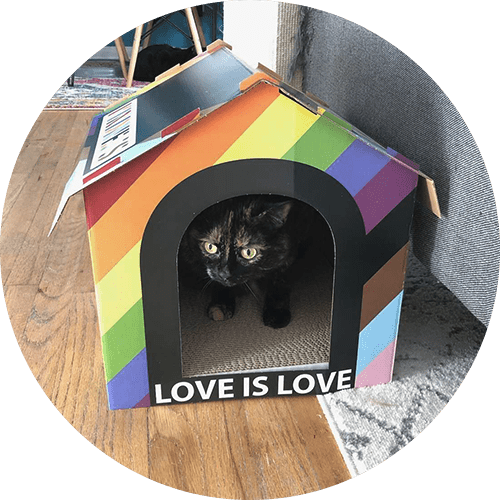 A cat in a pride colored box that says love is love.